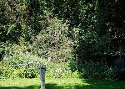 100-jarige-buxusbomen4