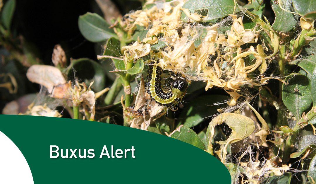 Buxus Alert
