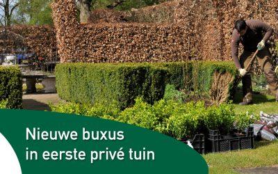 Nieuwe buxus in eerste privé tuin van Nederland
